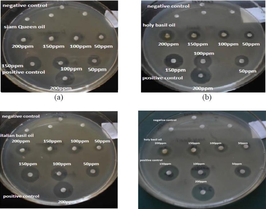 Antibacterial activity of (a): Siam queen against Bacillus subtilis. (b): holy basil against Xanthomonas axonopodis, (c): Italian basil against Microbacterium lacticum, (d): holy basil against Yersinia ruckeri.