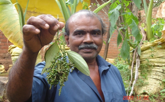 Farmer T. T. Thomas with Spike branching black pepper Type