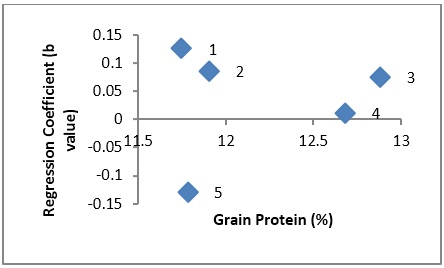 Scatter plot showing relationship of cultivars adaptation Regression Coefficient) and grain protein percentage in wheat