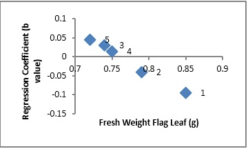 Scatter plot showing relationship of cultivars adaptation (Regression Coefficient) and fresh weight flag leaf in wheat