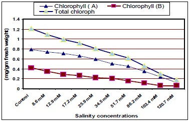Leaf content of chlorophyll of jojoba leaves as Affected by Different Salinity Treatments