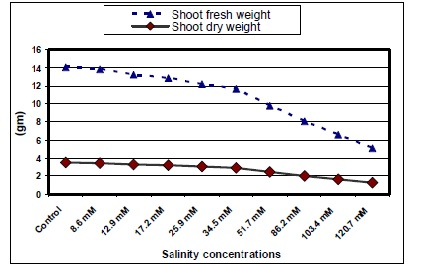 Shoot weight (fresh & dry) of jojoba as Affected by Different Salinity Treatments