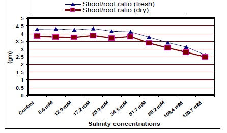 Shoot/root Ratio (fresh & dry) of jojoba as Affected by Different Salinity Treatments