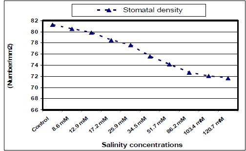 Stomatal density of jojoba leaves as affected by different salinity treatments