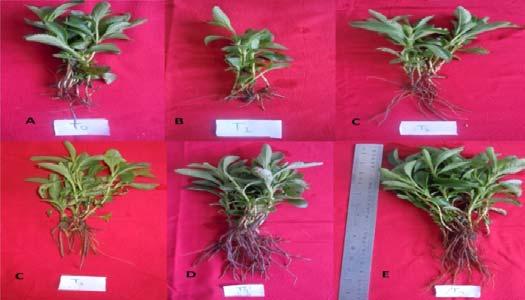 (A) Soil (B) Soil + saw dust (1:1) (C) Soil+ vermicompost (1:1) (D) Soil + sand (1:1) (E) Soil + FYM (1:1) (F) vermicompost + soil + FYM (1:1:1)