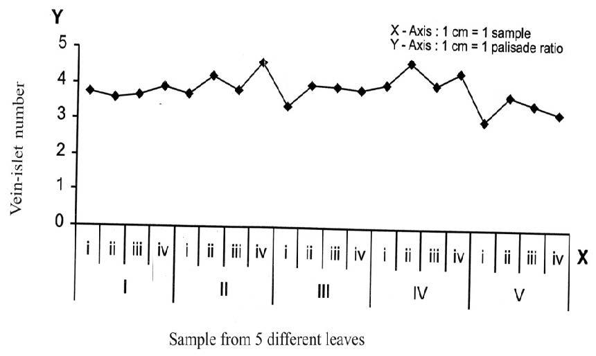 Sida cordifolia L.: Vein-islet number