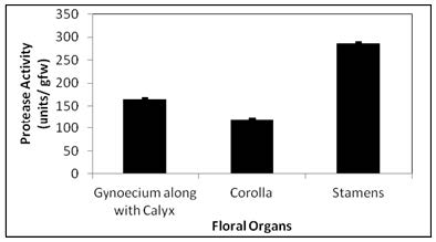Protease activity of floral organs of J. grandiflorum