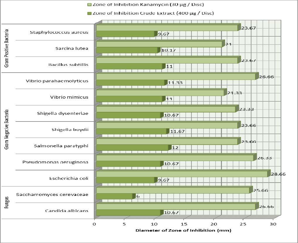Graphical Presentation of Antimicrobial Activity of Cissus quadrangularis