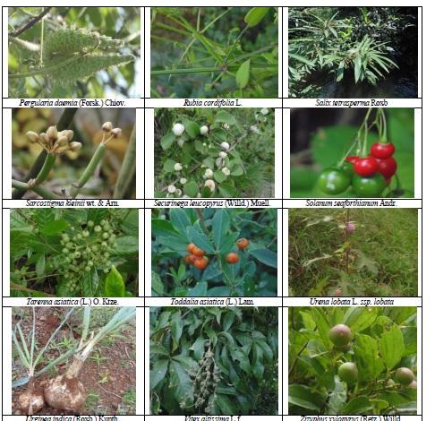 Wild Medicinal plants of Hassan district, Karnataka