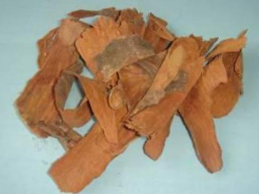 Corynanthe yohimbe