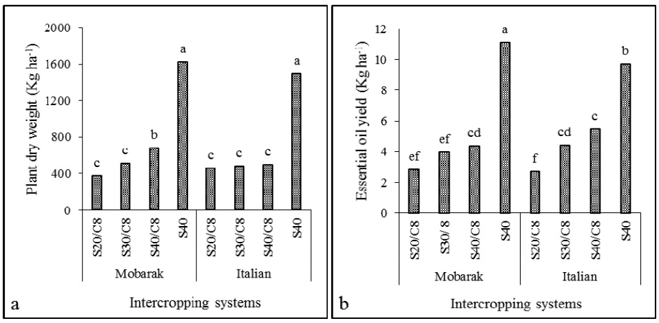 Plant dry weight (a) and essential oil yield (b) of sweet basil cultivars (Mobarake and Italian large leaf) in response to different intercropping systems with corn