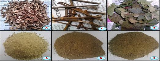 A&B: Roots and Dried powder, C&D: Stem and Dried powder and E&F: Leaves and Dried powder.