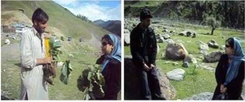 Interview of local people during collection of R. spiciforme and other medicinal plants from different altitudes of Gurez valley