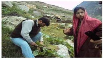 Interview of local people when collection of R. webbianum and other medicinal plants from different altitudes of Ladakh and Zanskar region