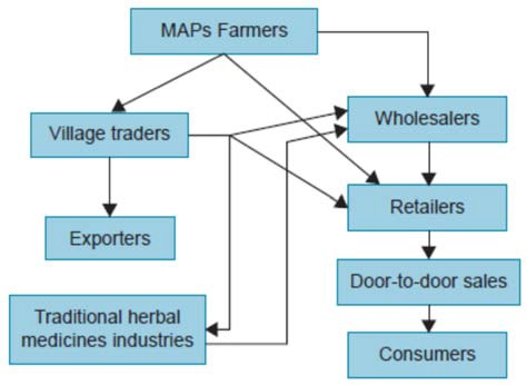 Supply chain of medicinal plants (Marshal, E., 2011) [9]