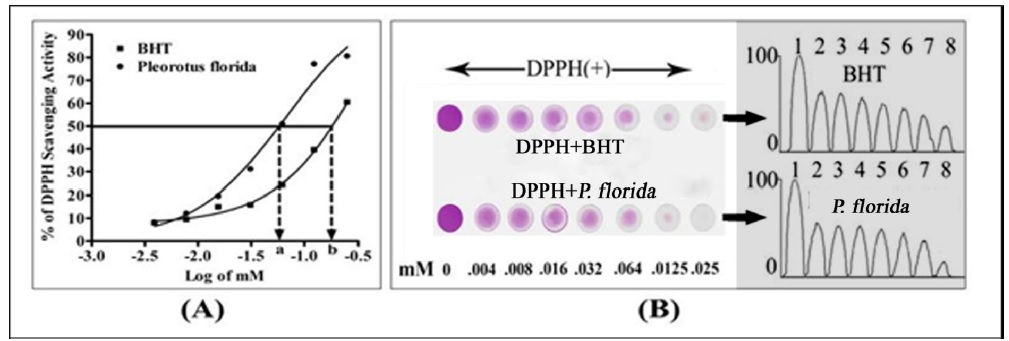 DPPH-scavenging activity of P. florida . (A). The IC50 values of P. florida . Data are the mean ± SEM of triplicate determinations. IC50 values were calculated by fitting the data to nonlinear regression analysis equitation [dose-response]. (B). Comperative DPPH- deactivating activity of BHT and P. florida . TLC plate was stained initially with 8.0 l solution DPPH. After air dry the spots were reloaded with 8 µl volume of butylated hydroxyl toluene (BHT) and P. florida extract at equimolar concentration. The stable DPPH free radicals were clearly deactivated by the antioxdants (BHT and extract), as indicated by the gradual lightening of the DPPH's purple color of the spots. The scavenging effects were dose dependent. The color of the spots was digitized and calculated by using NIH ImageJ analyzer (Right panel).