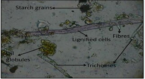 Powdered sample of root of Ficus retusa. Linn showed lignified cells, trichomes, fibres, oil globules and starch grains.