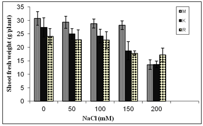 Shoot fresh weight (g/plant) of three ecotypes of Ocimum basilicum when four weeks old plants were subjected to varying levels of NaCl salinity stress for further four weeks grown in sand culture in full strength Hoagland's nutrient solution